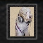 All Paws Pet Talk Radio picture